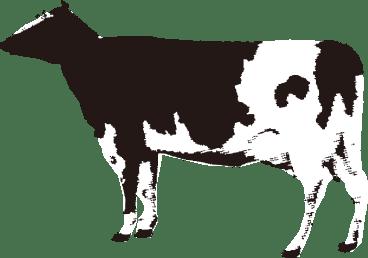 イメージ;乳牛