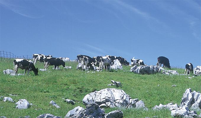 イメージ:資源循環型畜産