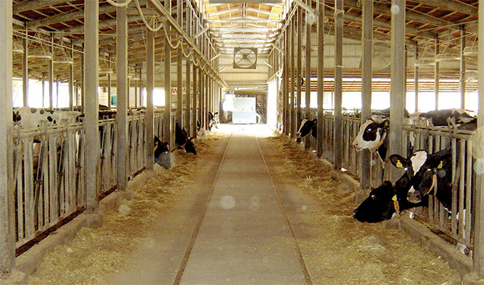 イメージ:効率的な生乳生産体制の整備